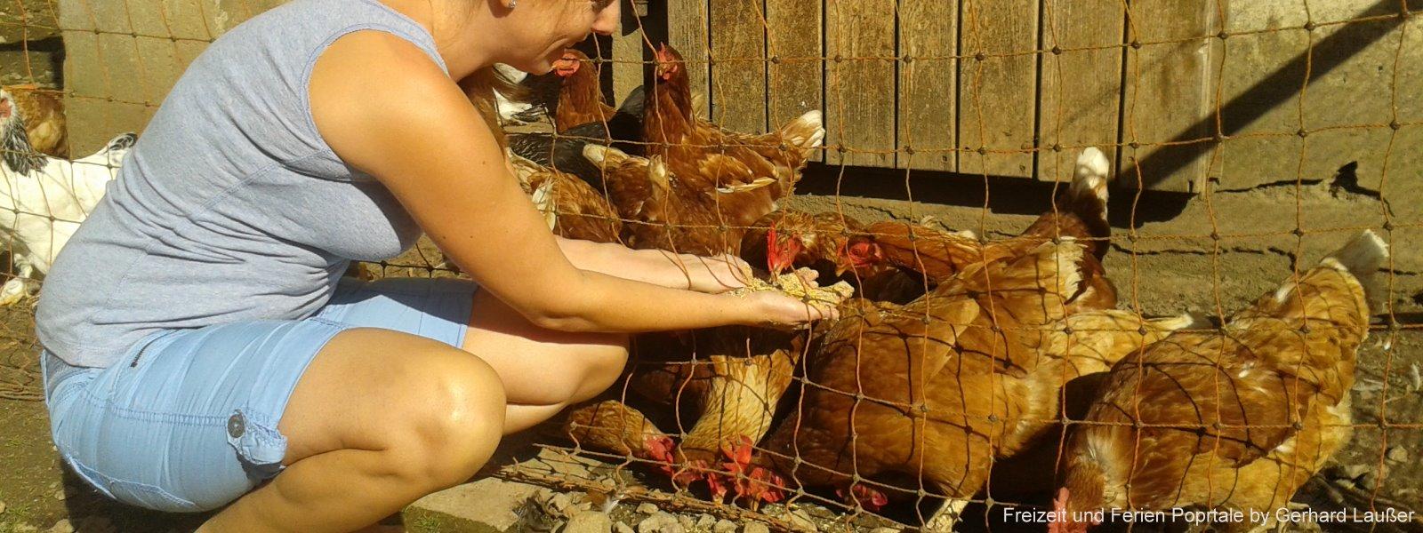 Mithelfen im Urlaub am Bauernhof Hühner füttern